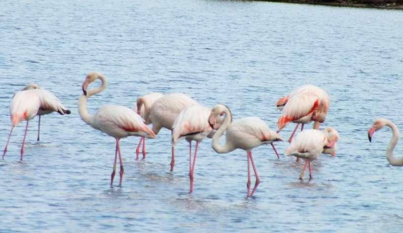 fenicotteri nella laguna