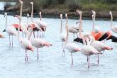 vista fenicotteri dalla laguna